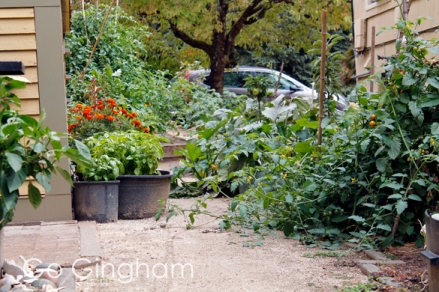 Side yard garden Go Gingham