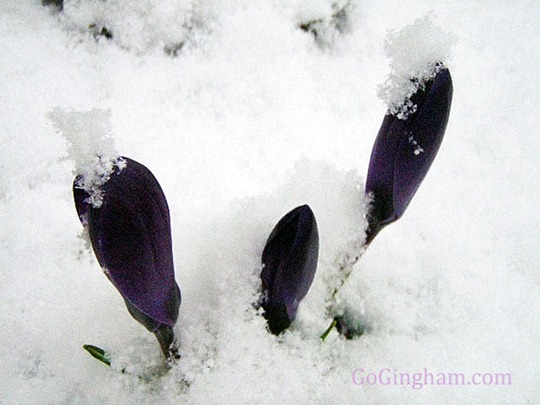 Go Gingham: Flowers in snow: funeral etiquette