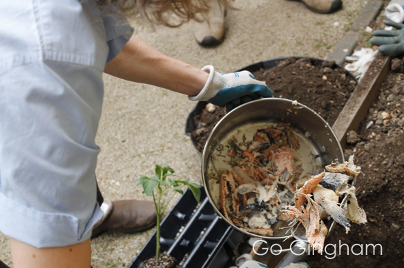 Plant fish scraps with tomatoes Go Gingham