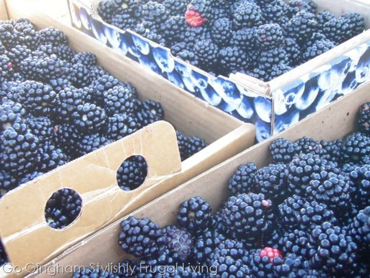 Berries from summer