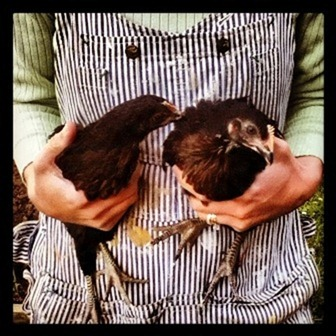 Chickens and overalls - Go Gingham style!