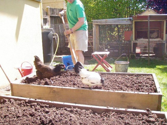 Vegetable garden with compost