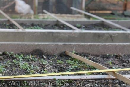 Urban-homestead-garden.jpg