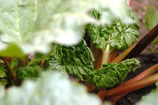 Non-Gardeners Gardening Strategy