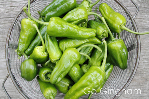 Spicy padron peppers Go Gingham