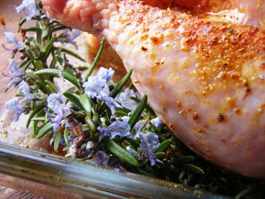 Rosemary with chicken