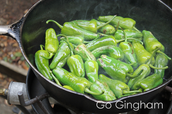 Spanish padron peppers Go Gingham