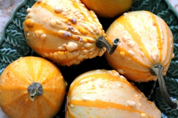 Decorative gourds from Go Gingham