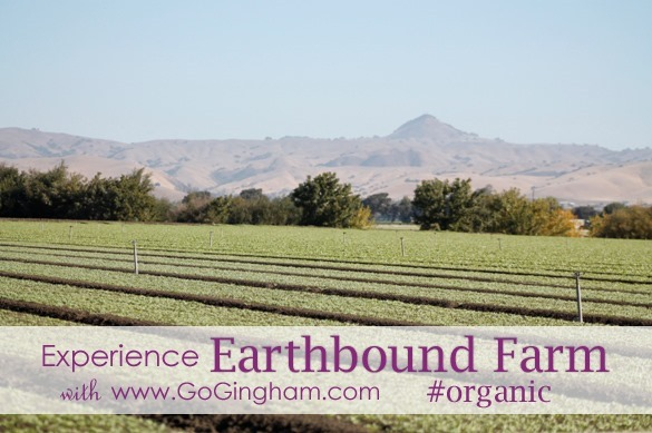 Experience Earthbound organic with Go Gingham