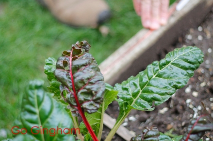Vegetable garden with copper tape Go Gingham