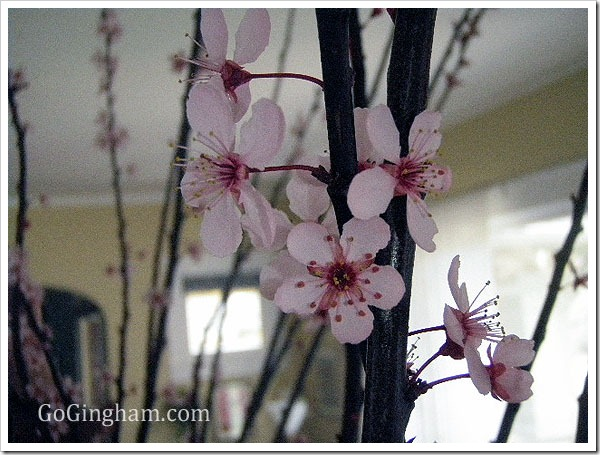 Frugal Decorating with Cherry Blossoms