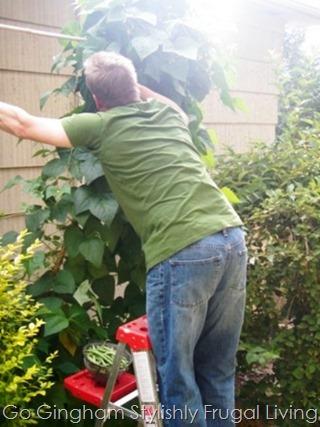Go Gingham Sky gardening