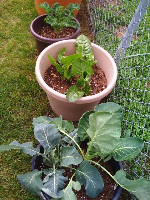 Growing Vegetables in Alaska
