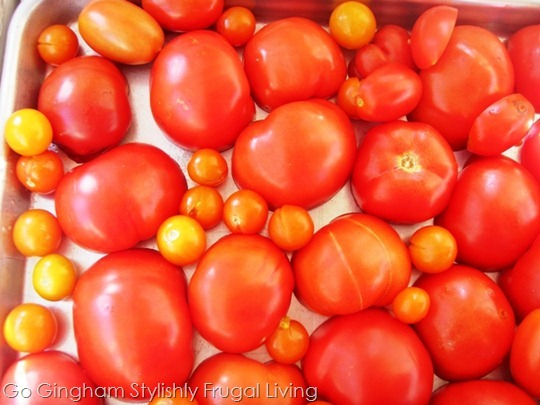 Roast tomatoes from garden
