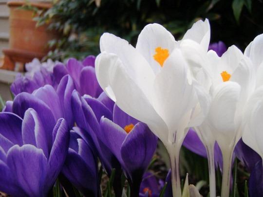 Pretty Spring Flowers
